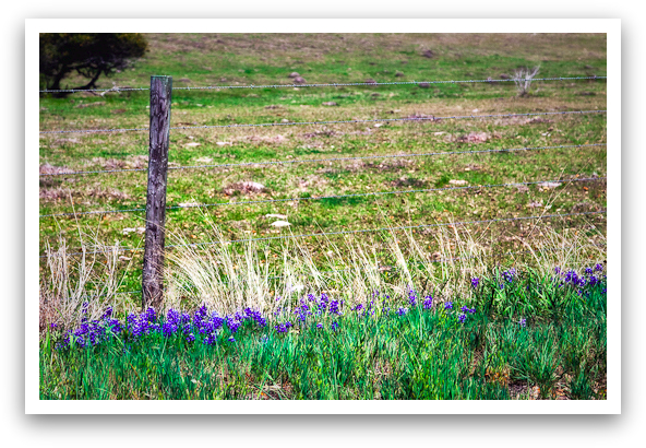 Wildflowers by the Fence
