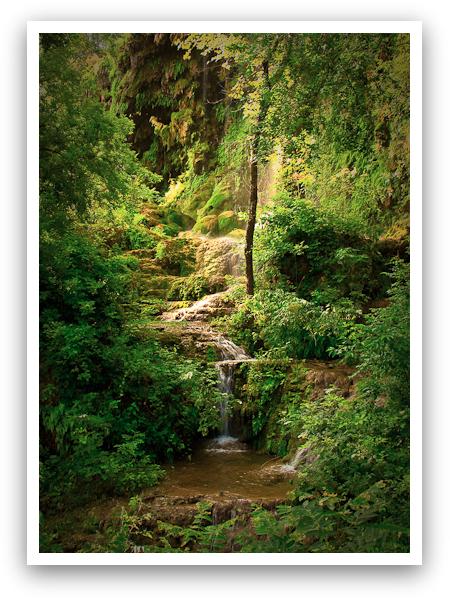 Gorman Falls Beginnings