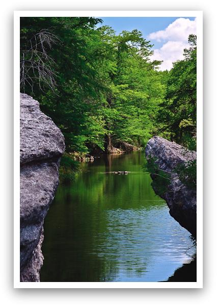 Rocks, Trees and Turtles