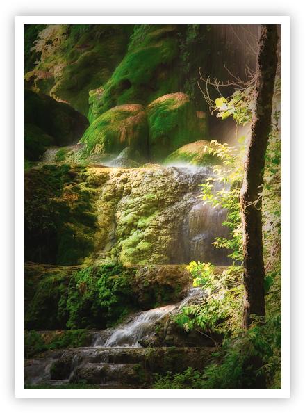 Moss & Rocks