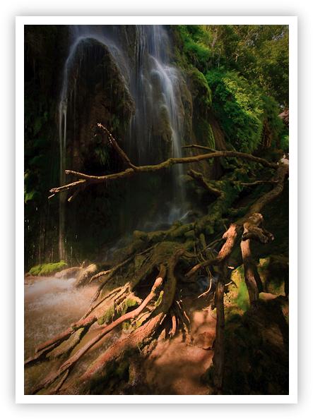 Texas Rain Forest