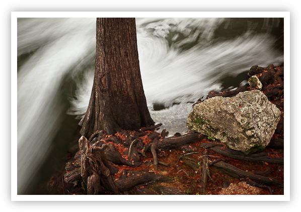 Rock & Cypress