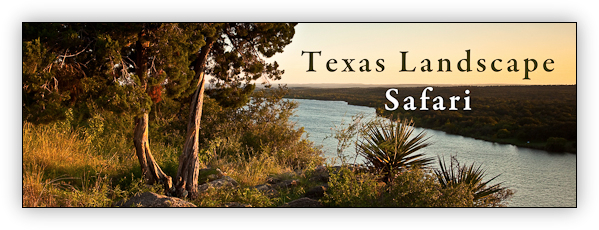 Texas Landscape Safari