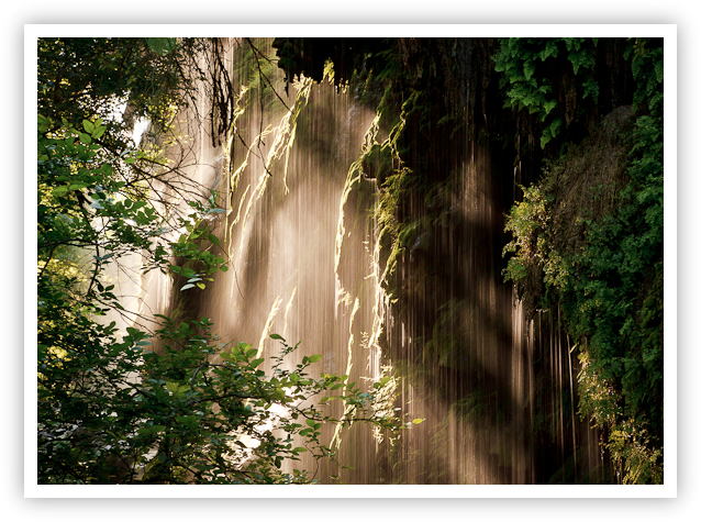 Texas Rainforest